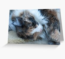 Sleeping Maine Coon Cat Greeting Card