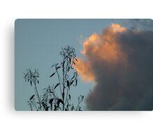 Sky Contrasts Canvas Print
