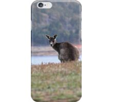 Curious Kangaroo at Wyangala iPhone Case/Skin