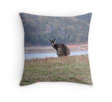Curious Kangaroo at Wyangala Throw Pillow