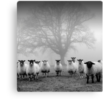 The Tree Guardians Canvas Print