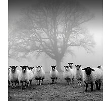 The Tree Guardians Photographic Print