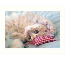Small Cat Art Print