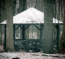 Shelter by Veronica Schultz