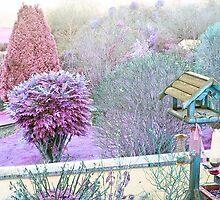A Colourful Garden by missmoneypenny