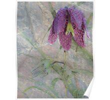 Fritillaria Snake's Head Poster