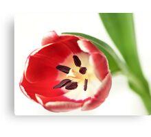 Confident Tulip... Canvas Print