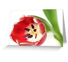 Confident Tulip... Greeting Card
