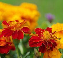 flowers at termas huifen, chile by Daidalos