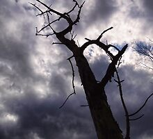 Reaching up to an ominous sky by vigor