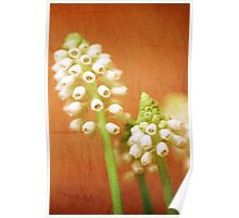 Textured Muscari Poster