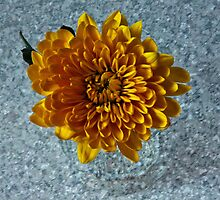 Chrysanthemum by Doug McRae