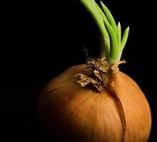 Tasty Onion by Thomas Splietker