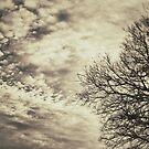 Dusk by Kingstonshots