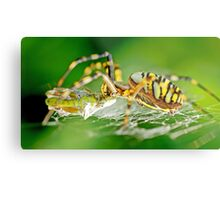 Wasp Spider Metal Print