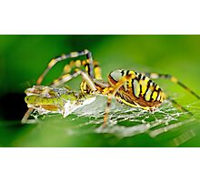 Wasp Spider Photographic Print