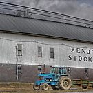 Xenodocha Stock Farm - Polkville, NY by Edith Reynolds