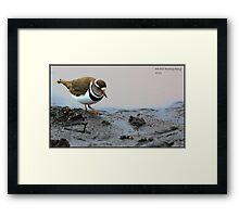 Plover Framed Print