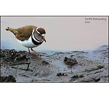 Plover Photographic Print