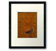 Silver Gull Framed Print