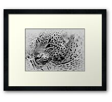Rest Before The Hunt Framed Print