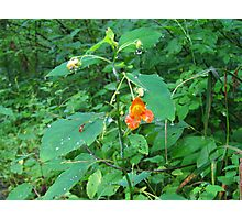 Orange Flower in the Woods Photographic Print