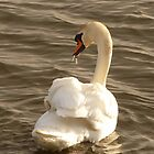 The Swan With The Runny Nose by Fara