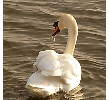 The Swan With The Runny Nose Photographic Print