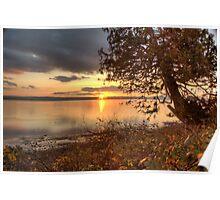Sundown Upon a Leaning Cedar Poster