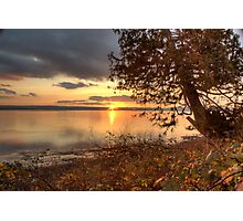 Sundown Upon a Leaning Cedar Photographic Print