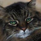 Rascal Cat by evergleammm