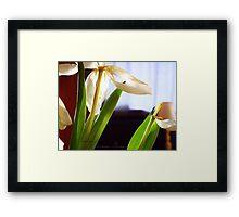 tulip [grain] Framed Print