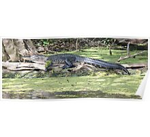 Lazy Gator Poster