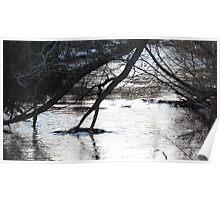 Winter Stream 2 Poster
