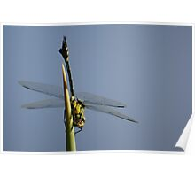 The Wonder of Dragonfly Wings Poster