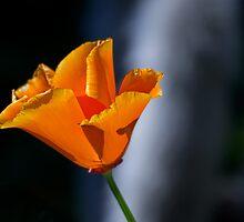 Drama in orange by Celeste Mookherjee