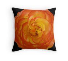 Apricot Yellow Rose on Black Throw Pillow