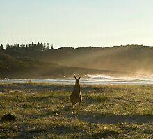 Kangaroos 2 by Sarah Swenson