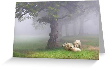 Misty morning by Lyn Evans