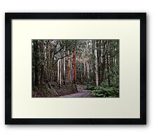 Towering Mountain Ash Framed Print