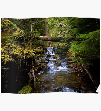 The Headwaters Of Quartzville Creek Poster