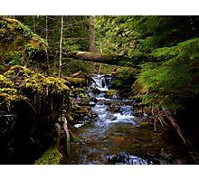 The Headwaters Of Quartzville Creek Photographic Print