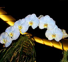 White Orchids by Tony Weatherman