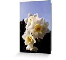 Baby daffodils. Greeting Card