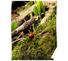 First ladybird of spring! Poster