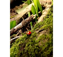 First ladybird of spring! Photographic Print
