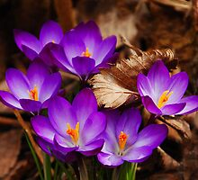 First Signs of Spring  by Elaine  Manley