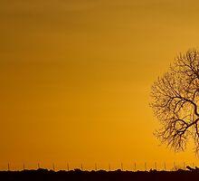 Rising Sun Panorama by Bo Insogna