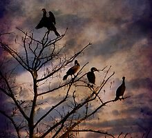 Cormorants at Twilight by Amy Jackson