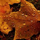 Rain on Leaf by Andre Faubert